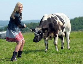 fermiere et vache dans le pre