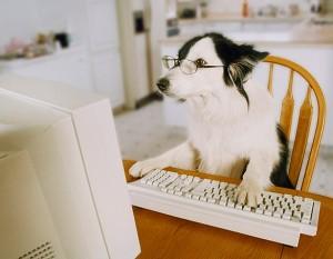 chien ecrivain